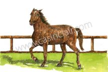 Mike, a Morgan Horse, Runs by Fence